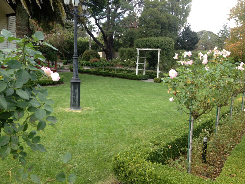 Gallery Abcal Garden Property Maintenance Rose Pruning Two